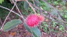 Rambutan near boundary