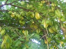 Starfruits at Aro